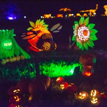 Glowing jack-o-lanterns on display at THE GLOW in Charlotte.